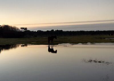 Moreno+sunset2
